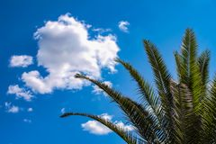 Background of blue sky with clouds and palm tree with fronds to one side - room for copy. A Background of blue sky with clouds and palm tree with fronds to one stock images