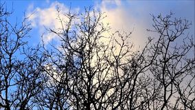 Background blue sky with clouds, time lapse, tree, winter. Background blue sky with clouds and tree stock video