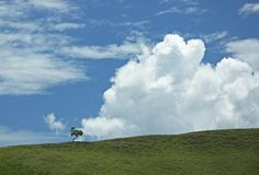 Background of blue sky and green grass Stock Images