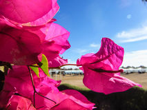 Background blue sky, pink flowers and sea Royalty Free Stock Photos