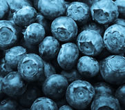 Background of blueberries Stock Photo