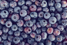 Background with Blueberries Royalty Free Stock Images