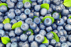 Background from blueberries Royalty Free Stock Photos