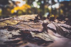 Background, Blur, Brown Royalty Free Stock Images