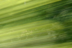 Background Blur Green. Trees in abstract - blurry way Royalty Free Stock Photo
