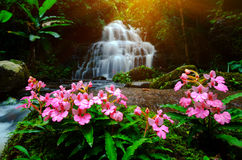 Background blur Mandang waterfall in Thailand.With a pink flower. Background blur and soft focus Mandang waterfall in Thailand.With a pink flower foreground was royalty free stock photo
