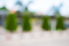 Background blur of nature stock photography