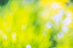 Background with blurred yellow and green spots Royalty Free Stock Photos