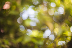 Background bokeh . Royalty Free Stock Image