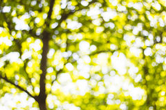 Background Bokeh from the sun under the shade of trees Stock Photography
