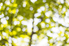 Background Bokeh from the sun under the shade of trees. Royalty Free Stock Images