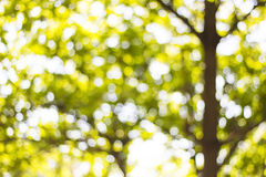 Background Bokeh from the sun under the shade of trees Royalty Free Stock Image