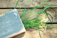 Background with book and grass Royalty Free Stock Photos