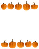 Background or border image of pumpkins; thanksgiving or hallowee. This stock photo features a white background and 2 rows of mini pumpkins as a border.  Great Royalty Free Stock Photos