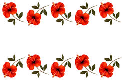 Background with a border of red flowers. Stock Photography