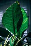 Background, Botanical, Close-up Stock Photo