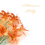 Background of a bouquet Royalty Free Stock Photo