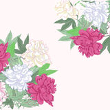 Background with bouquet  pink and white peonies Stock Images