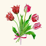 Background with bouquet of tulips-06 Stock Photography