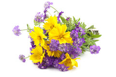 Background from a bouquet of wild flowers Stock Images