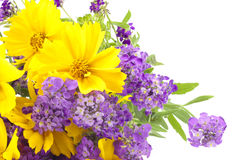 Background from a bouquet of wild flowers Royalty Free Stock Images