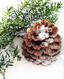 Background with branch and cone. On white snow Royalty Free Stock Image