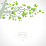 Background with branch and green leaves Royalty Free Stock Photo