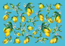 The background of the branches of fresh citrus fruit lemons with green leaves and flowers. Royalty Free Stock Image