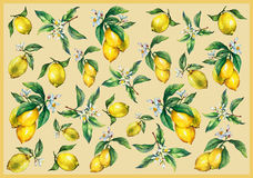 The background of the branches of fresh citrus fruit lemons with green leaves and flowers. Royalty Free Stock Photos