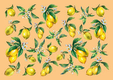 The background of the branches of fresh citrus fruit lemons with green leaves and flowers. Stock Photo