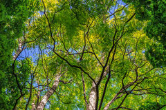 Background. Branches and leaves of trees against a background of blue saturated sky. Horizontal frame Royalty Free Stock Photos