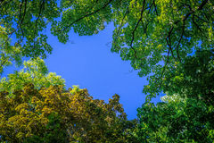 Background. Branches and leaves of trees against a background of blue saturated sky. Horizontal frame Stock Images