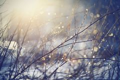 Background with branches with patches of light from sunshine. Royalty Free Stock Image