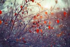Background with branches and raindrops Royalty Free Stock Photos