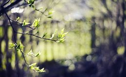 Background with branches in the spring stock photography