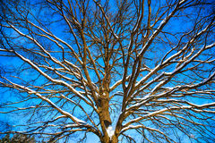 Background from the branches Royalty Free Stock Photos