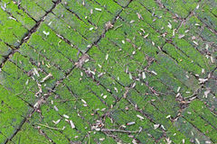 Background of brick. Texture of old brick covered green moss Stock Photo