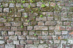 Background of a brick wall with moss and weeds Royalty Free Stock Images