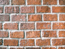Background of the brick wall Stock Image
