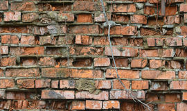 Background of brick wall texture. As a background Royalty Free Stock Photo