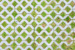 Background bricks with grass Royalty Free Stock Photo