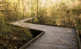 Background of bridge/road in the fall forest, joy, peacefullness, meditation, zen, state of mind stock photography