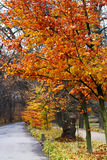 The background of bright autumn scenery Stock Image