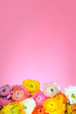 Background with bright flowers Royalty Free Stock Photography