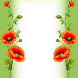 Background with bright flowers poppy for advertising Royalty Free Stock Photography