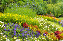 background of bright garden flowers Stock Images