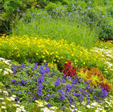 background of bright garden flowers Stock Image