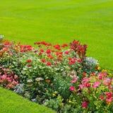 background of bright garden flowers Stock Photos