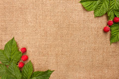 The background with the bright raspberries Stock Photos