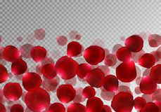 Flying red rose petals. Background with bright rose petals flying upwards on a transparent backdrop. Vector design for a romantic design Stock Images